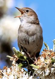 noise pollution,effects of noise on birds,urban noise,soundproofing,noise deadening material,