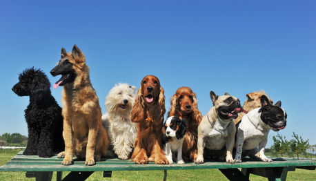 Group of dogs from kennel who installed Acoustiblok