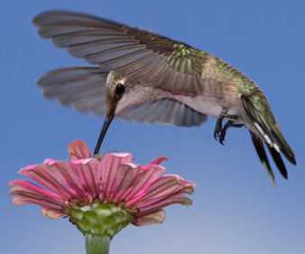 noise, sounds, hummingbird,noise pollution,noisy communities,noise pollution,industrial noise